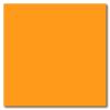 Apricot 12 x 12 Glossy